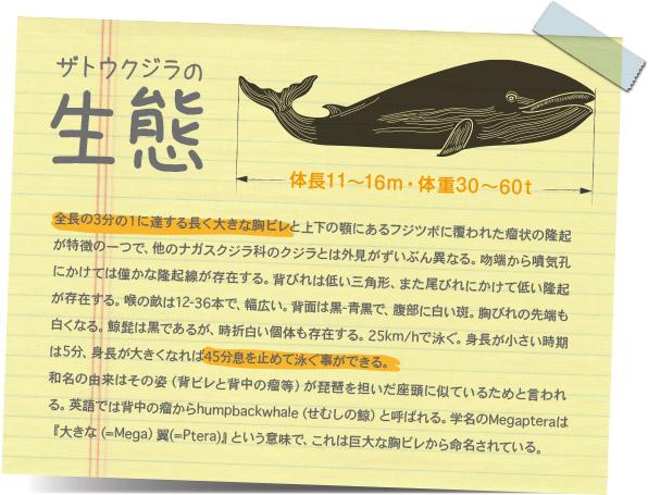 ザトウクジラの生態
