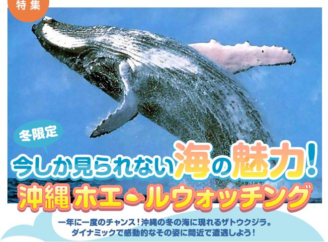 冬限定 今しか見られない海の魅力!沖縄ホエールウォッチング