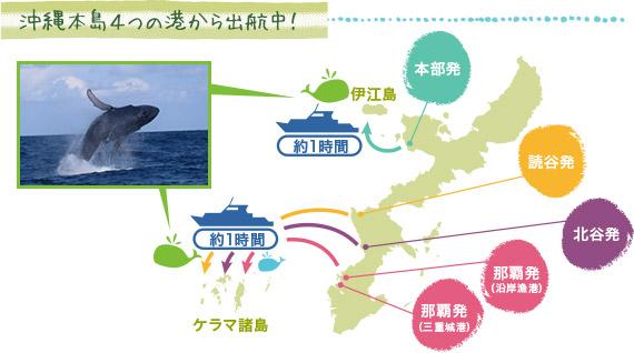 沖縄のホエールウォッチングがすごい理由!!