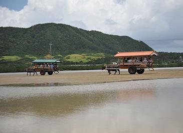 離島めぐりおすすめ観光ツアーランキング