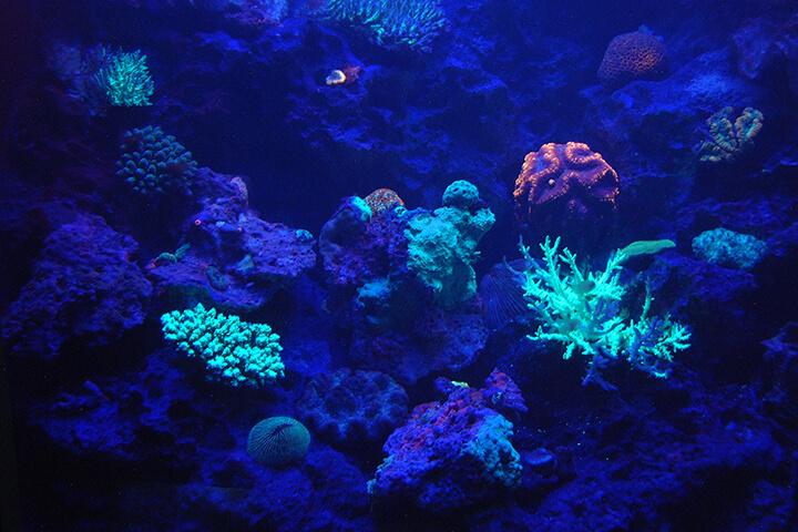 海のプラネタリウム