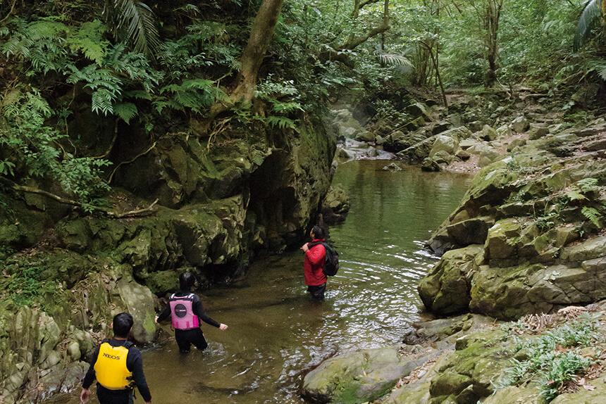 原生林に流れる川は神秘的な美しさ