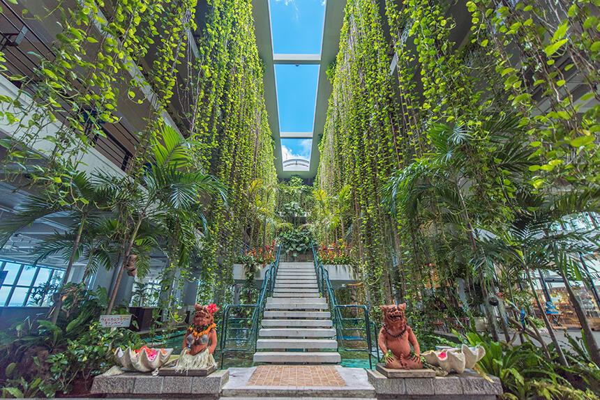 ムーンビーチ館内の緑のカーテン