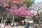 沖縄のおすすめイベント(その他)特集