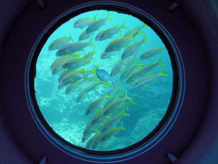 可以穿著衣服輕鬆的觀賞海中世界!