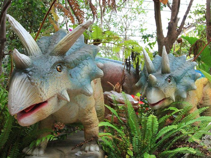 ダイナソーアドベンチャーツアーでは、恐竜たちがパイナップルパークに遊びに来ているので保護しております。夏場はパイナップルを食べているかも?!