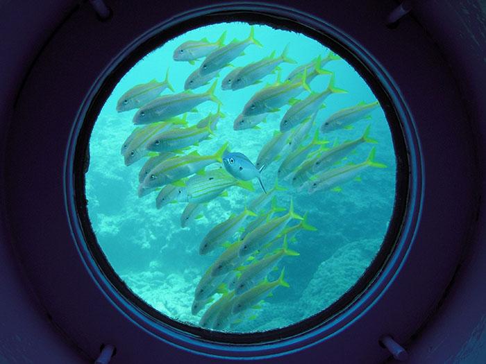 展望塔内 鮮やかに群れ泳ぐ熱帯魚に目を奪われる