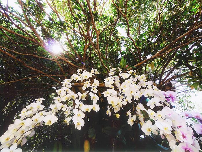 【森の貴婦人】たくさんのランの花が貴方をお出迎え