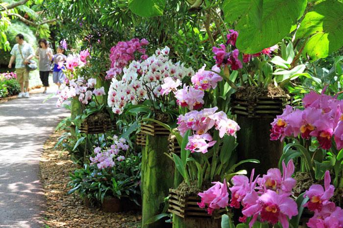 らんの花ディスプレイ 園内では、1年を通じて野外でらんの花が楽しめる