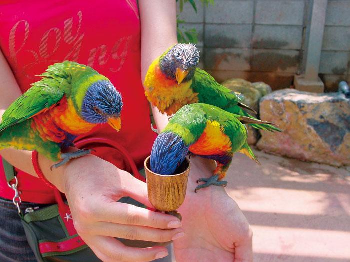 バードヤード 愛嬌たっぷりの鳥たちと触れ合う癒しの時間