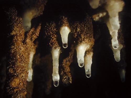 天然記念物・大鍾乳洞「玉泉洞」 世界でも類を見ないスケール