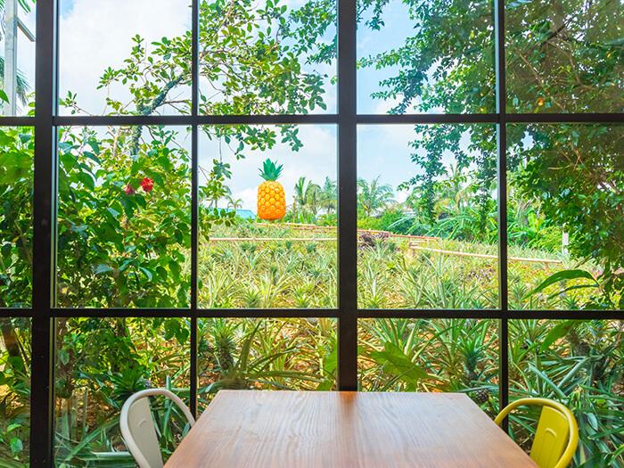 在果園內新開幕的「Pineapple Café」。想不想在綠意環繞中小憩一下?