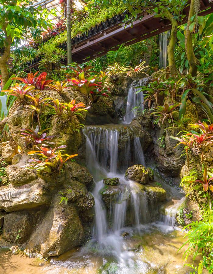 園內不僅可以從空中庭園鳥瞰亞熱帶植物景觀,還可以聽到清涼的瀑布流水聲,沁人心脾