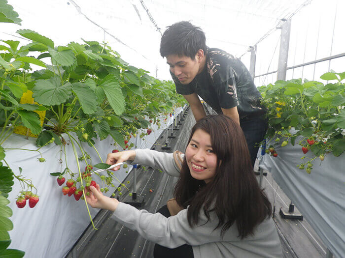 Only available from January to May: strawberry-picking experience
