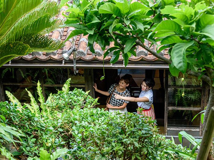 綠蔭環繞的古老民宅裡有許多適合拍照的景點