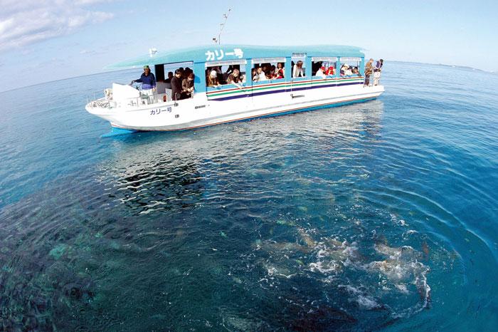グラスボートクルージング 海の上から海中をのぞいてみよう