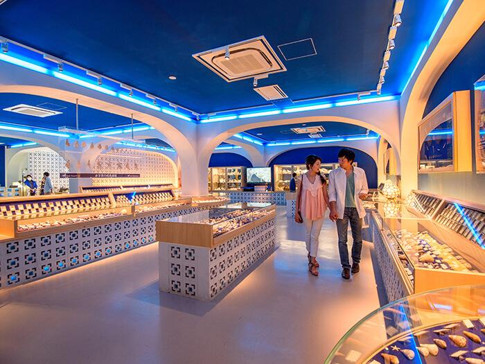貝殼博物館展示1萬件以上來自世界各地的貝殼,彷彿一座大海的博物館