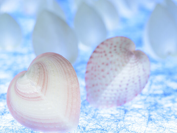 可愛心型的琉球青貝