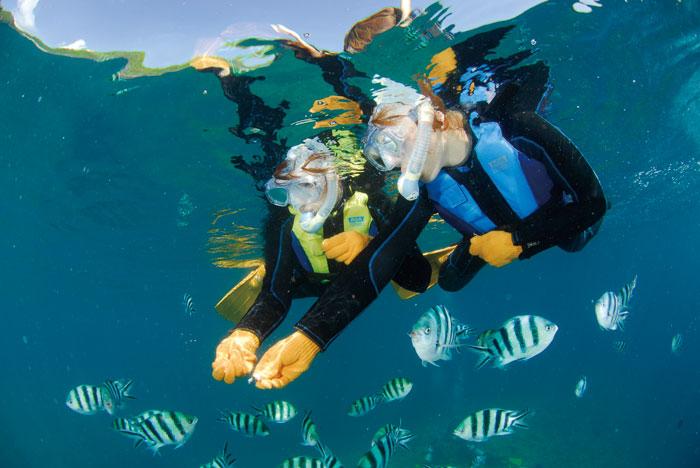 熱帯魚に餌付け カラフルな熱帯魚に餌付けをしながら触れあえる