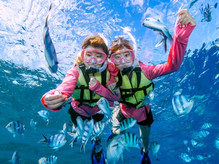 【C行程】乘小艇出發!珊瑚樂園+小丑魚&熱帶魚浮潛。申請對象:滿6〜65周歲。所需時間:2〜2,5h。100%邂逅小丑魚、和成群的小丑魚親密接觸。
