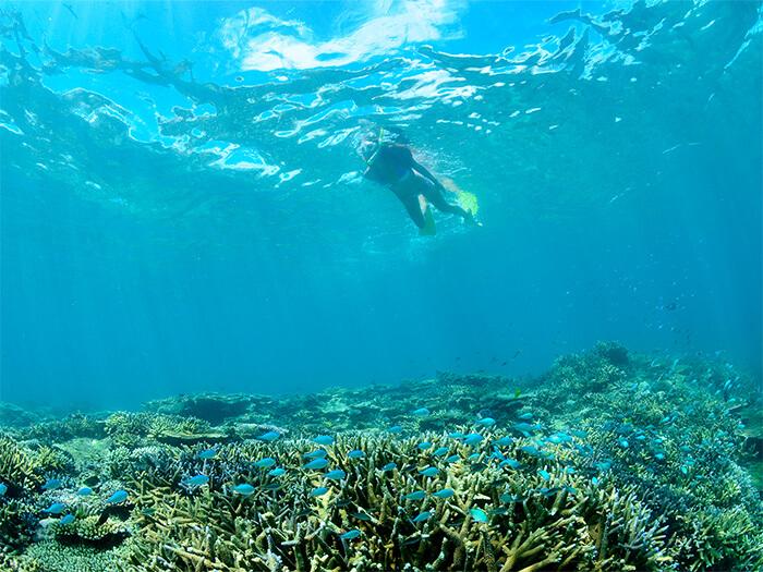 シュノーケルポイント  シュノーケルポイントには色とりどりのサンゴとお魚が