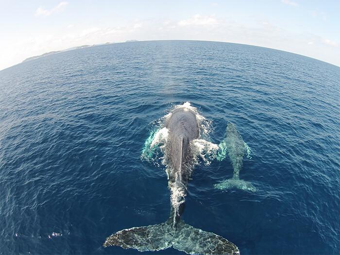 ナガンヌ島発ホエールウォッチング(1月~3月)~ナガンヌ島近海でクジラを探そう~