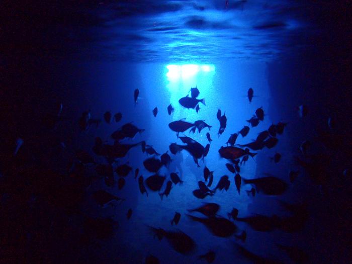 歡迎親自用雙眼來驗證湛藍的美景