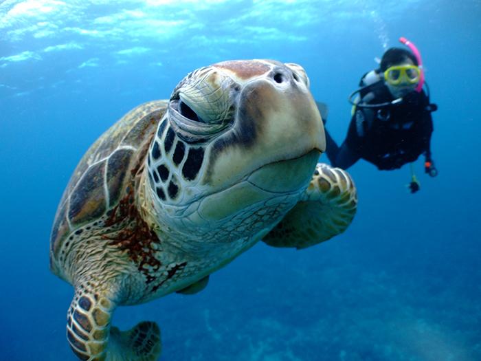 「結合三個觀光景點的慶良間諸島一日遊」 不需上陸、依當天的海象狀況來為您介紹慶良間諸島周邊最適合浮潛、潛水的三個景點