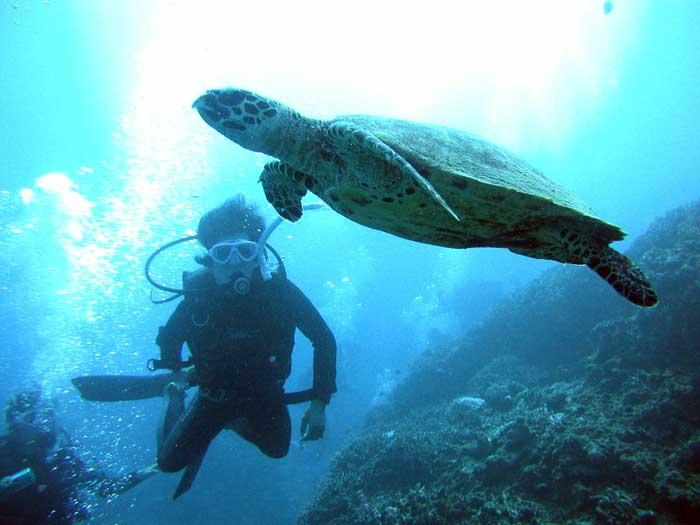 慶良間體驗潛水&浮潛初學者也OK