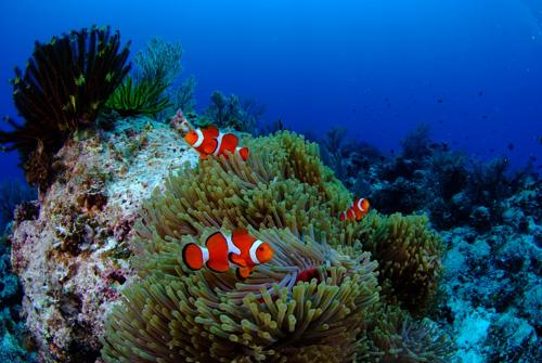 碰見魚群。並能夠近距離的觀察