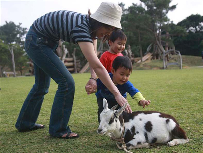 Enjoy petting the goats and walking around with them