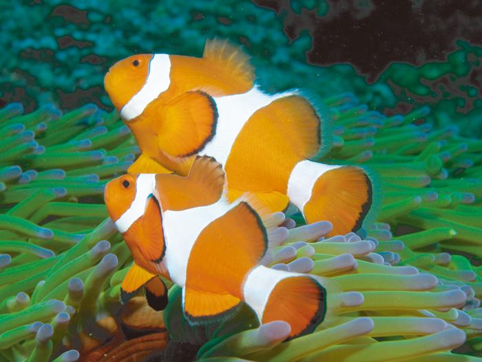 能夠遇見可愛的小丑魚與熱帶魚群