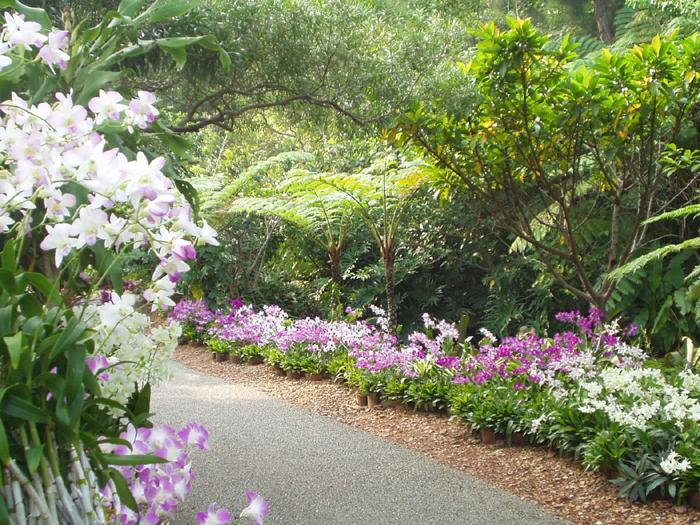 不分季節全年都可欣賞到野外栽培的蘭花