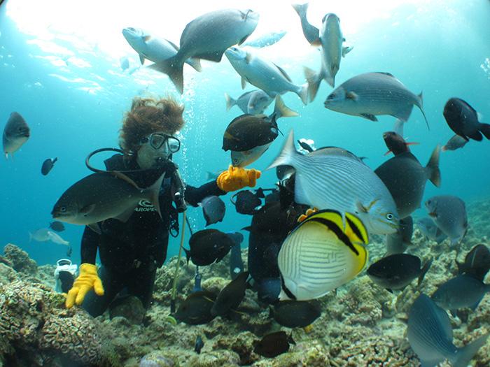 投喂餌料可以吸引許多可愛魚兒