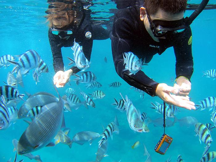 所有行程皆免費附贈餵魚飼料! 讓魚群近距離的聚集到您的眼前!