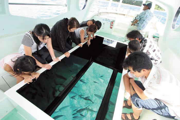 多种多样热带鱼