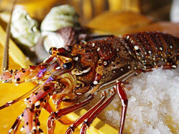 高級食材伊勢蝦