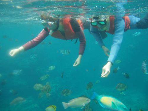 餵食飼料的體驗,能讓各式各樣色彩的魚群離您更近