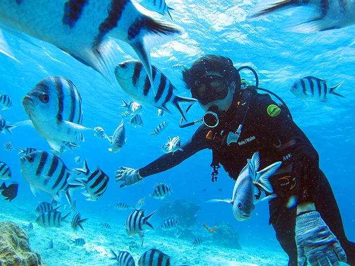 即使是潛水行程也有提供免費飼料! 讓我們與大量魚群一起遊玩吧!