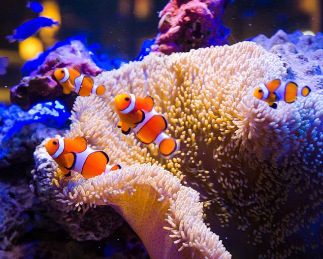 一邊欣賞美麗的熱帶魚與珊瑚,一邊享受美食吧!