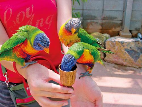 與各種顏色鮮明的鳥類接觸專區。