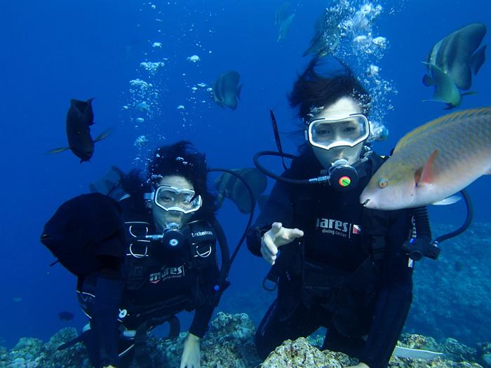 在藍色洞窟內與魚群們一起玩樂吧(淺水體驗旅遊行程)