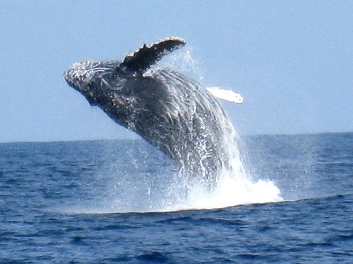 冬季限定!賞鯨行程