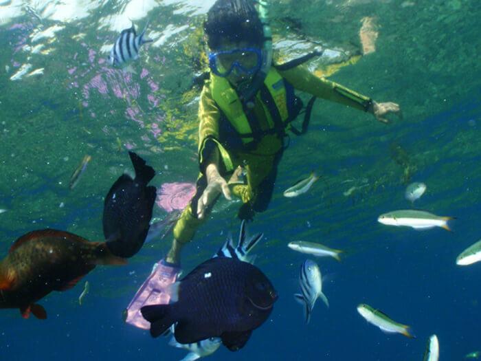 五彩繽紛的魚群聚集而來。