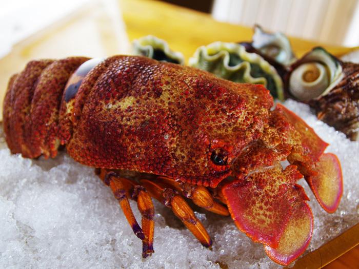本店的高級食材「蝉海老(龍蝦)」。推薦以生吃的方式來嚐鮮(價格會因產季不同而有所調整)