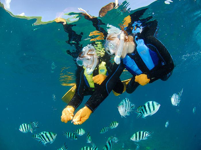 各式各樣鮮艷色彩的熱帶魚群於水中悠游!一起來體驗餵魚的樂趣