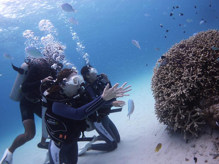 珊瑚與魚群朝氣氛勃地生存其中。