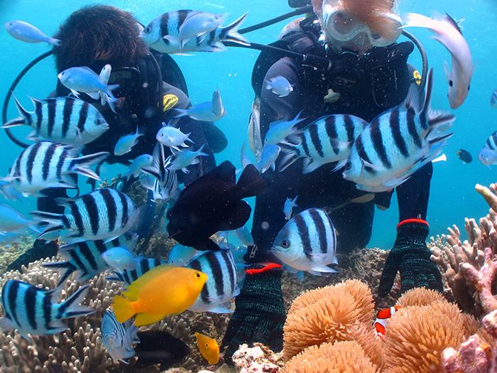 【D行程】乘小艇出發!珊瑚樂園+小丑魚&熱帶魚體驗潛水。申請對象:滿10〜64周歲。所需時間:2〜2,5h。一名教練最多帶兩名客人。