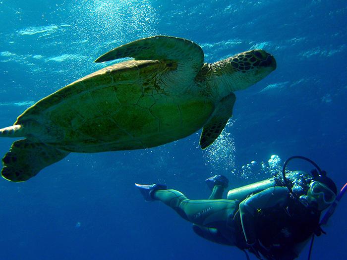 有遇到海龜的可能性