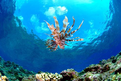 有機會遇到生存在美之海的魚群以及珍貴的海洋生物
